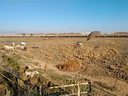 medi-ambient-agricultura-engisic-lleida